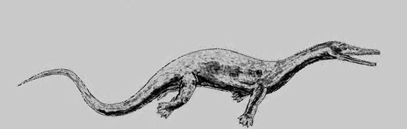 Askeptosaurus Askeptosaurus Prehistoric Land Reptiles Planet Dinosaur