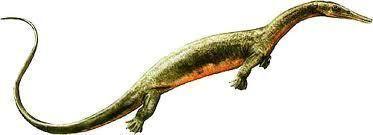 Askeptosaurus Askeptosaurusjpg
