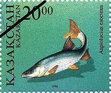 Aspiolucius esocinus httpsuploadwikimediaorgwikipediacommonsthu