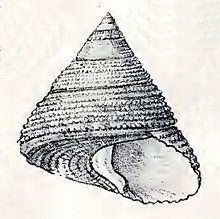 Astele httpsuploadwikimediaorgwikipediacommonsthu
