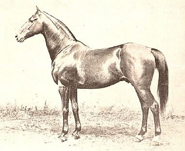 Asteroid (horse)