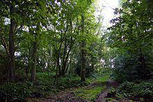 Aston Rowant Woods httpsuploadwikimediaorgwikipediacommonsthu