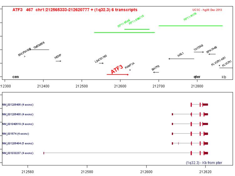 ATF3 ATF3 activating transcription factor 3