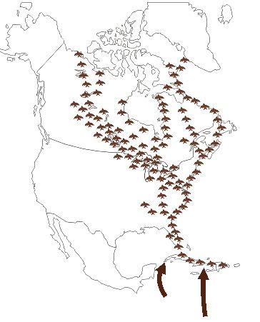 Atlantic Flyway TPWD Migratory Flyways of North America Atlantic Flyway