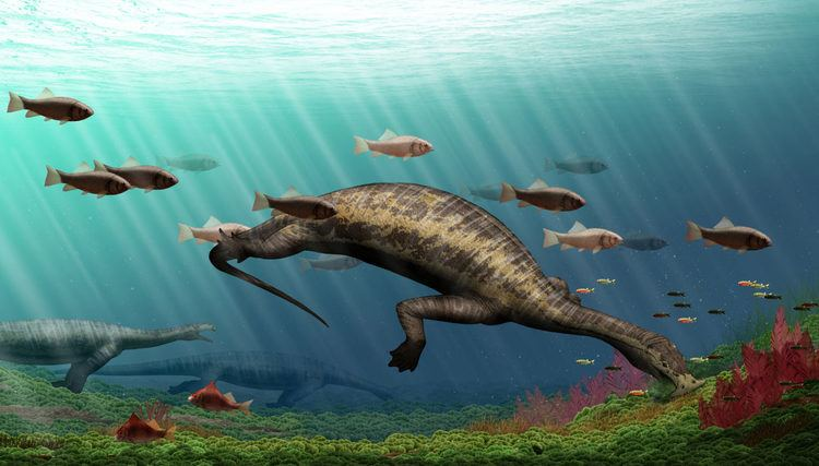 Atopodentatus Atopodentatus unicus Earth39s Earliest Herbivorous Marine Reptile