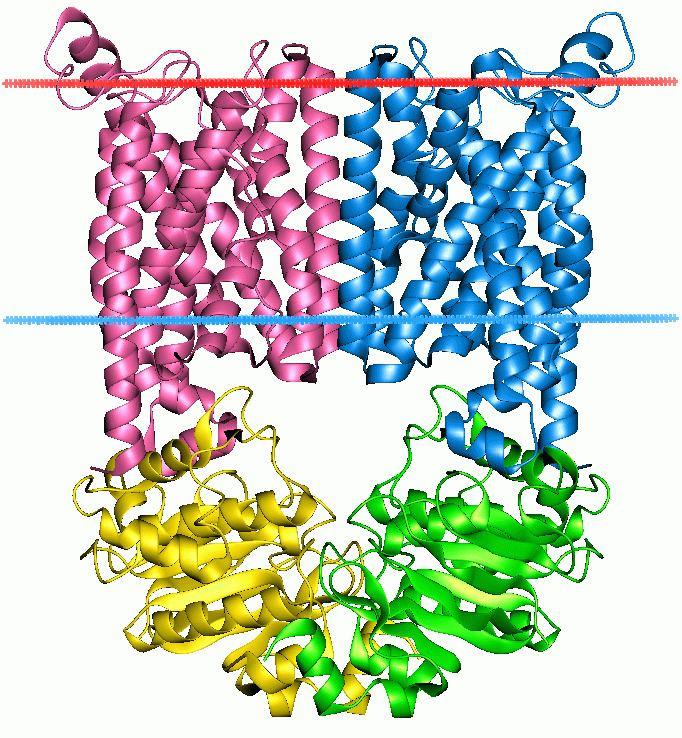 ATP-binding cassette transporter