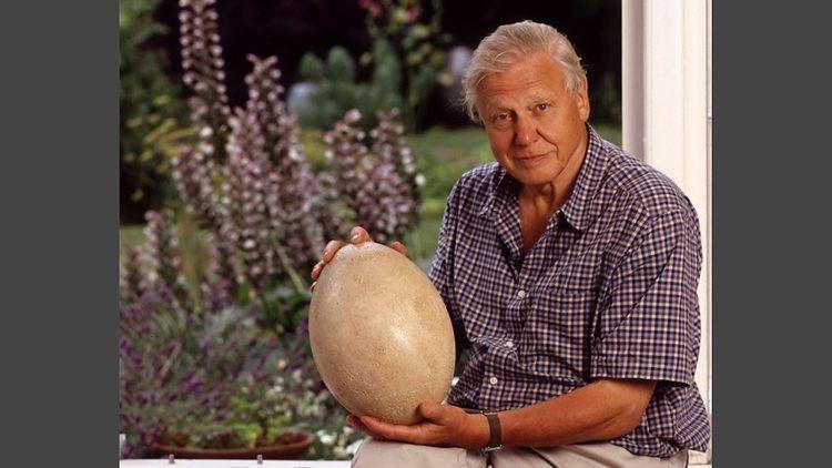 Attenborough and the Giant Egg BBC David Attenborough and the giant egg 1960 Zoo Quest to