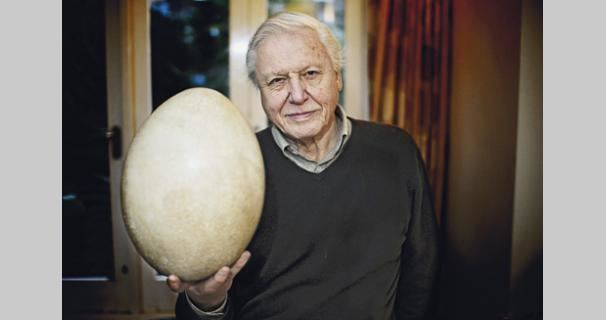 Attenborough and the Giant Egg In Which Sarah Barr Embraces Pain Challenge 16 Page 5