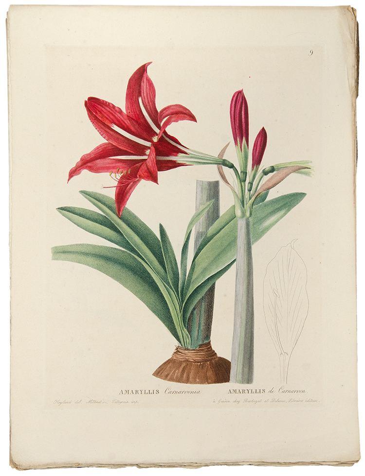 Augustin Pyramus de Candolle Plantes rares du Jardin de Genve Augustin Pyramus de CANDOLLE