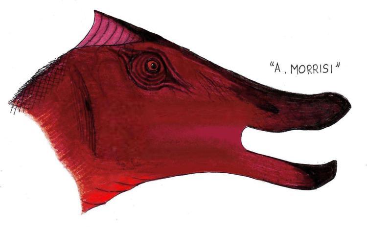 Augustynolophus FileAugustynolophuspng Wikimedia Commons