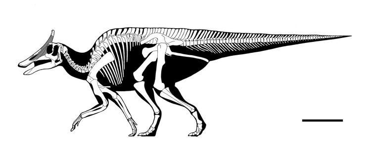 Augustynolophus