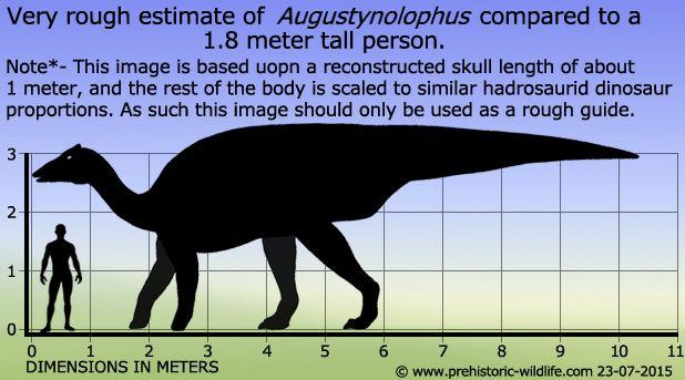 Augustynolophus Augustynolophus
