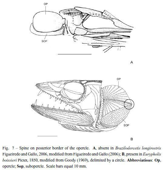 Aulopiformes Taxonomic review and phylogenetic analysis of Enchodontoidei