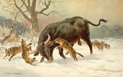 Aurochs Herd Animal Aurochs d20PFSRD