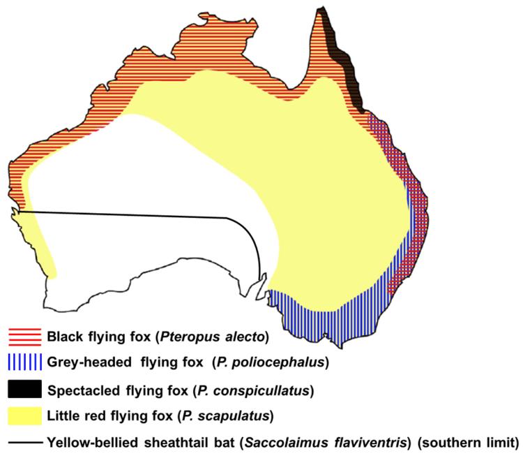 Australian bat lyssavirus Viruses Free FullText Recent Observations on Australian Bat