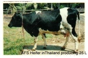 Australian Friesian Sahiwal Breeding Australian Friesian Sahiwal Dairy Company Pty Ltd