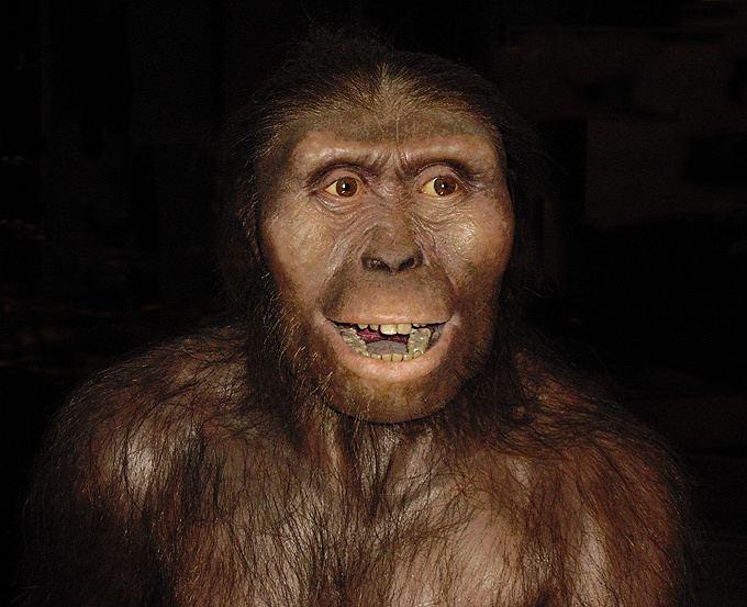 Australopithecus afarensis Australopithecus afarensis