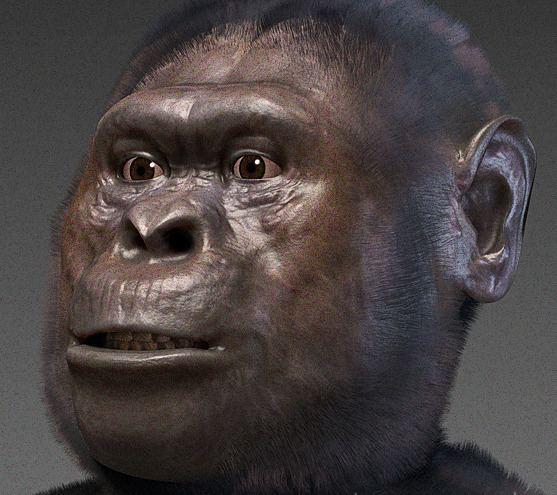 Australopithecus afarensis Australopithecus afarensis Wikipedia