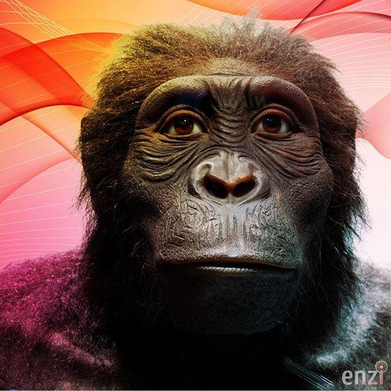 Australopithecus anamensis Australopithecus Anamensis Enzi