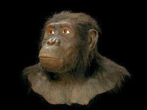 Australopithecus anamensis Australopithecus anamensis Google zoeken History 06 42