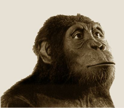 Australopithecus anamensis wwwarcheologhomecommediasimagesspain1jpg