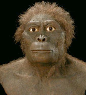 Australopithecus bahrelghazali AUSTRALOPITHECUS BAHRELGHAZALI Es la primera evidencia de fsiles