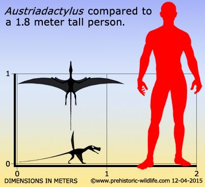 Austriadactylus Austriadactylus