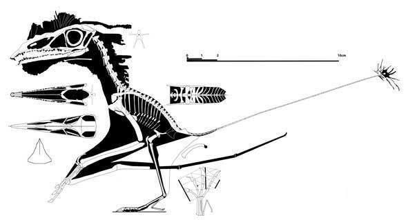 Austriadactylus Austriadactylus the Italian specimen