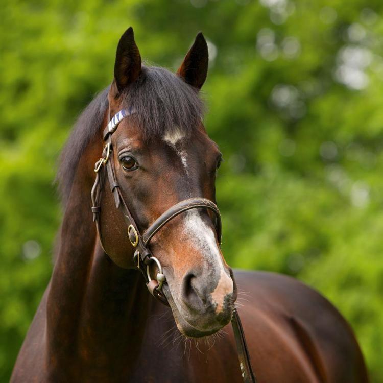 Authorized (horse) Authorized Europe