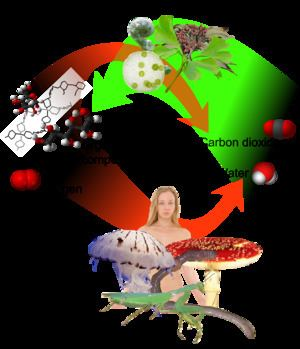 Autotroph Autotroph Wikipedia