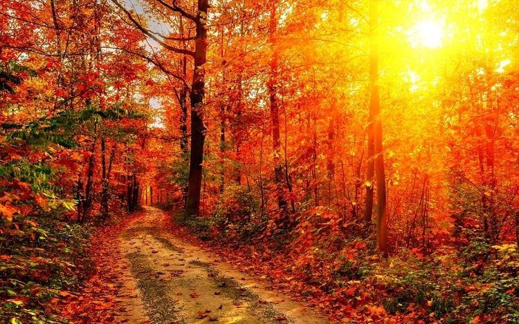 Autumn Sun Autumn Sun 2560x1600 Wallpapers13com