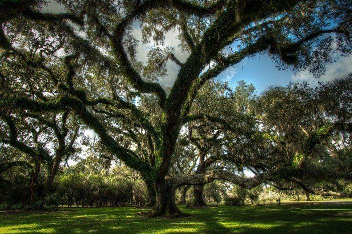 10 Amazing Facts about Avery Island Louisiana