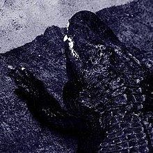 .avi (album) httpsuploadwikimediaorgwikipediaenthumbd