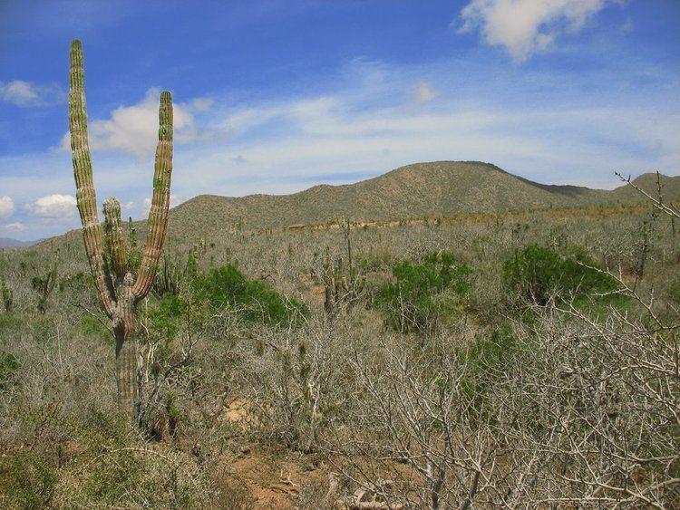Baja California Sur Beautiful Landscapes of Baja California Sur