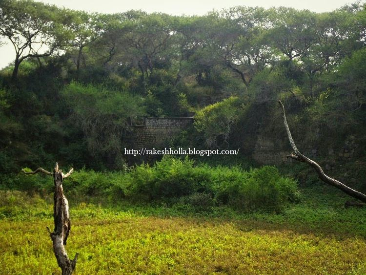 Bankapura Peacock Sanctuary The Voice of Greenery Trekking and Travelling in Western Ghats