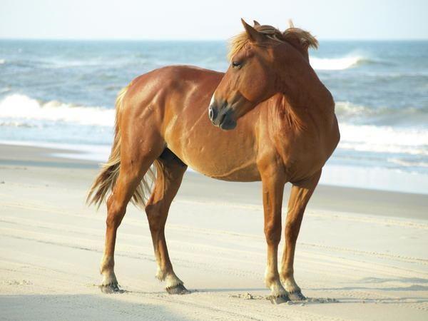 Banker horse 1000 images about Banker Horse on Pinterest