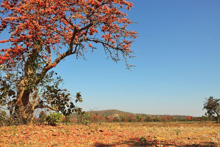 Bankura district Beautiful Landscapes of Bankura district