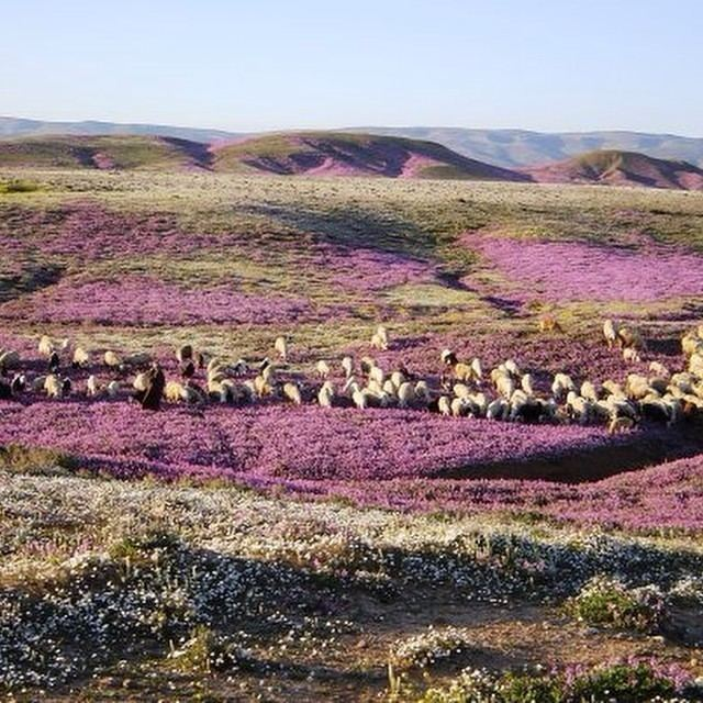 Batna, Algeria Beautiful Landscapes of Batna, Algeria