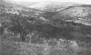 Battle of Italeni samilitaryhistoryorgvo045iubjpg