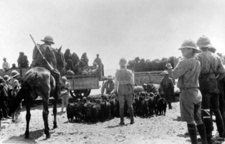 Battle of Romani FileEvacuation of locals before Battle Of Romani 1916 AWM J06075