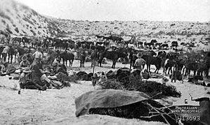 Battle of Romani httpsuploadwikimediaorgwikipediacommonsthu
