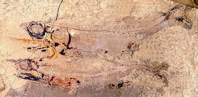 Bear Gulch Limestone Life Before the Dinosaurs The Bear Gulch Limestone
