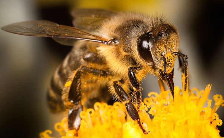 Bee How Bees Fight Strawberry Mold and Landmines Modern Farmer