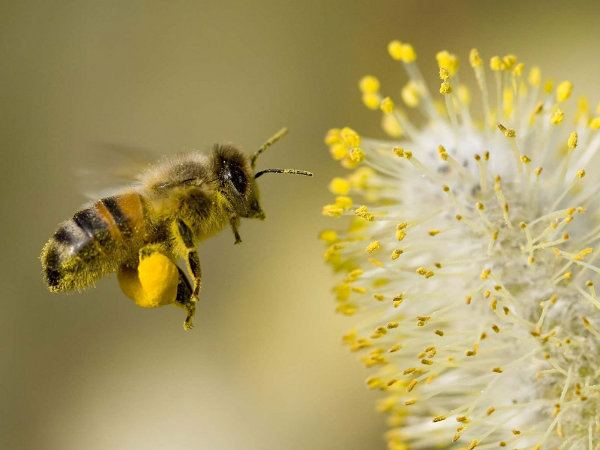 Beekeeping in Nepal