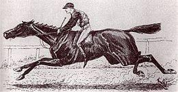 Ben Ali (horse) httpsuploadwikimediaorgwikipediacommonsthu