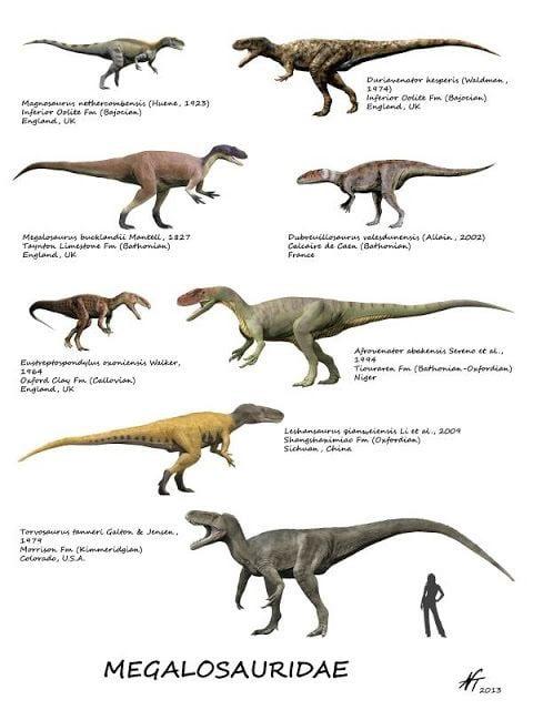 Berberosaurus Spinops September 2013