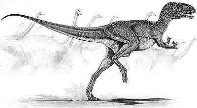 Berberosaurus Forum Dinozaurycom Zobacz wtek OPIS Berberosaurus