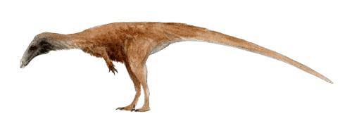 Berberosaurus Berberosaurus liassicus A Dinosaur A Day