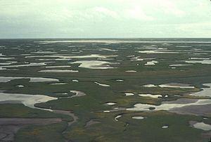 Beringia lowland tundra httpsuploadwikimediaorgwikipediacommonsthu