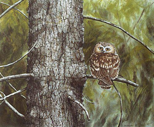 Saw Bermuda AlchetronThe Owl Whet Free Social Encyclopedia OiwkPuTXZ